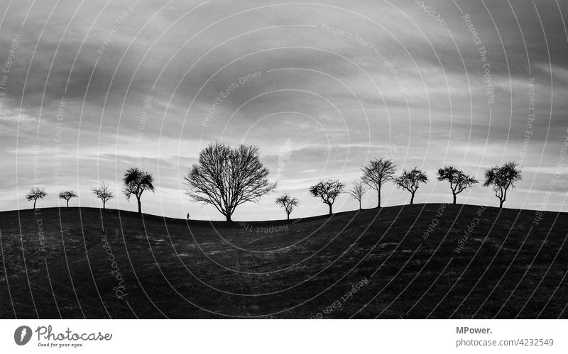 alone under 12 fine black-white trees Hill bare trees Human being Hiking on one's own Gloomy somber Curved Small Horizon silhouette Clouds Winter Sky Landscape