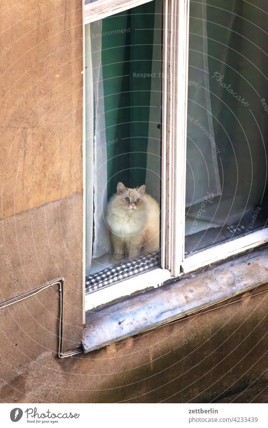 Cat in window Old building on the outside Facade Window Window seat House (Residential Structure) rear building Backyard Courtyard Interior courtyard downtown