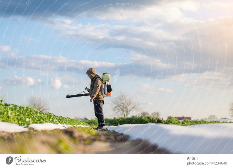 A farmer sprays chemicals on a potato plantation field. Control of use of chemicals growing food. Protection of cultivated plants from insects and fungal infections. Increased harvest.