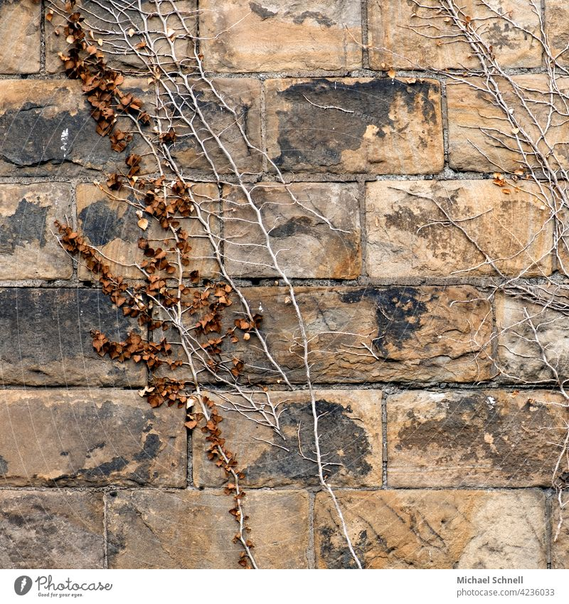 Old wall with plant growth Wall (barrier) masonry Creeper creeper Wall (building) Plant Colour photo Overgrown upstairs