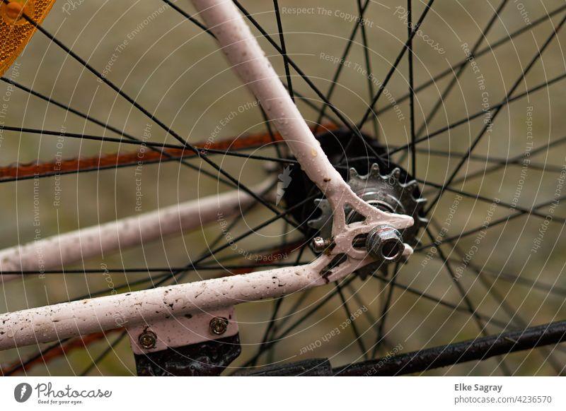....Biking is timeless #fahrad Exterior shot Detail color photograph Colour photo Street rear wheel Joy Driving Leisure and hobbies