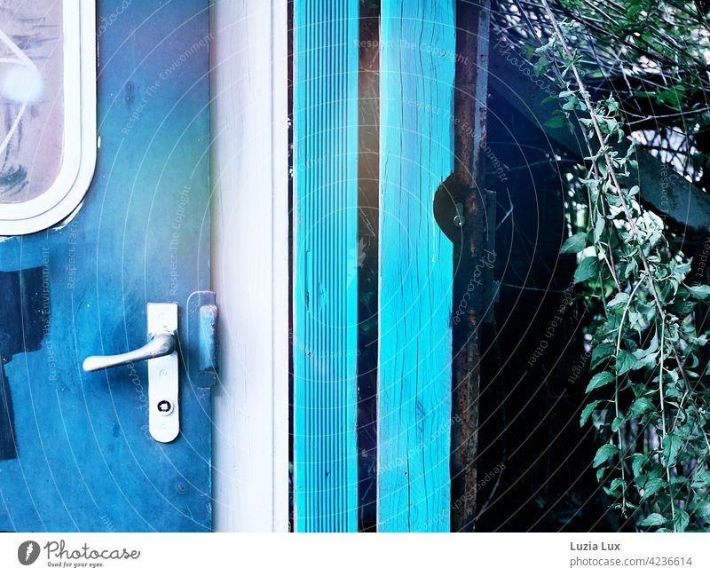 Bright blue: an old wagon door long since misused, overgrown in the sunlight Blue luminescent Old railcar Car door Turquoise Light Rust Old fashioned transient
