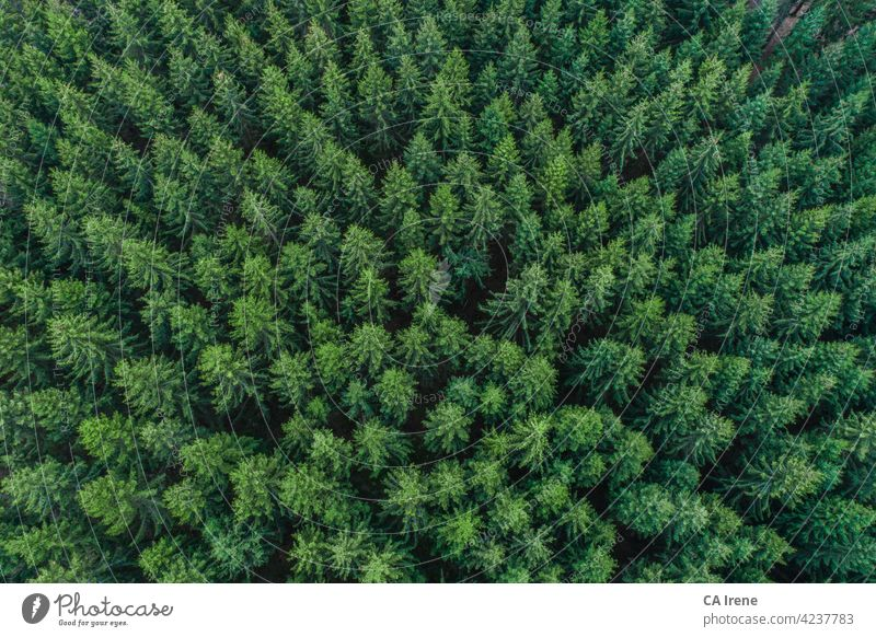 Aerial view of green conifer treetops in forest, Germany aerial drone trees texture wood nature spruce fir leave surface abstract pattern bark textured above