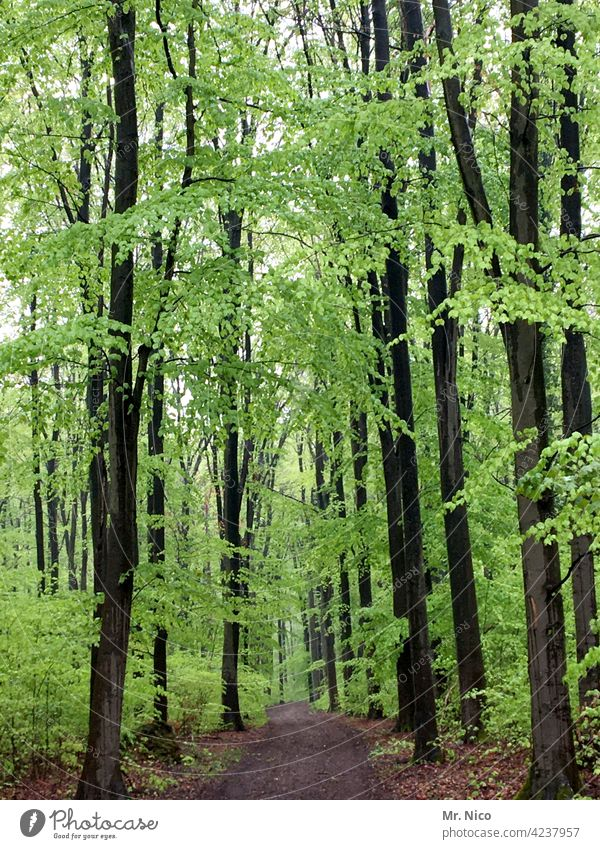 SPRING IN THE FOREST Landscape Nature Environment Tree Bushes Forest Idyll To go for a walk Promenade Lanes & trails Forestry Seasons Plant naturally Relaxation