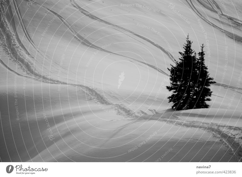 winter watch Nature Landscape Winter Snow Plant Fir tree Green Black White Beautiful Calm Purity Elegant Idyll Far-off places Skiing Smooth Subdued colour