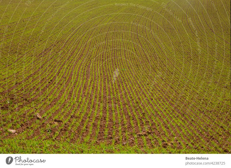 Things are progressing: Field with germinating seeds! Spring Seeds lines Pattern Curve elegance Growth growth line Green Green space Arable land Agriculture