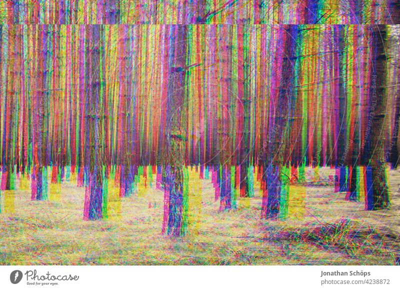 bare tree trunks in the forest with glitch effect Forest Tree trunk Bleak Coniferous forest Nature Landscape Exterior shot Deserted Environment Colour photo