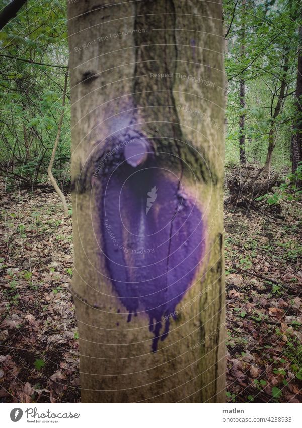 violet Colour Violet Tree Forest marked foliage Knothole Nature Exterior shot Wood Deserted
