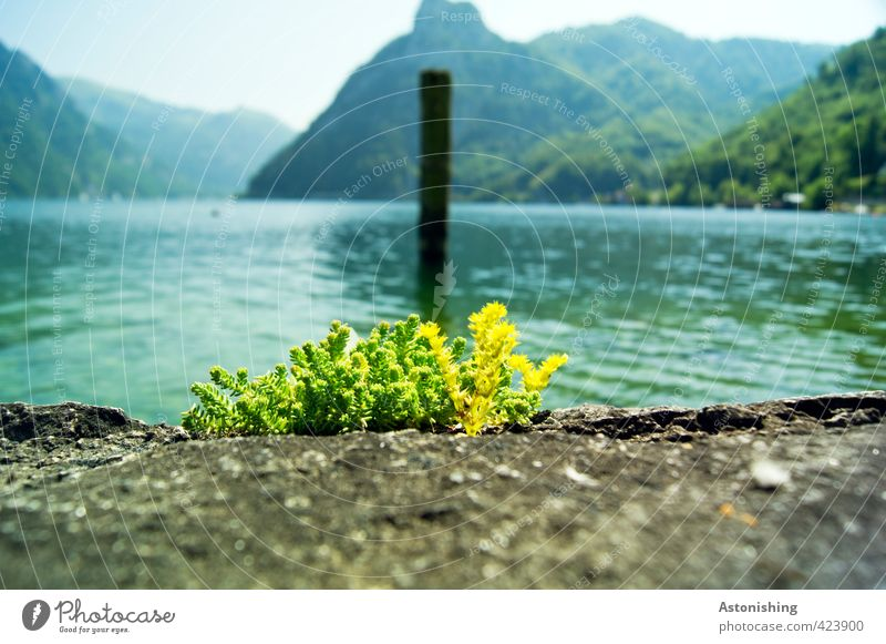 at Lake Traunsee Environment Nature Landscape Plant Water Sky Cloudless sky Horizon Summer Weather Beautiful weather Grass Hill Alps Mountain sunstone Peak