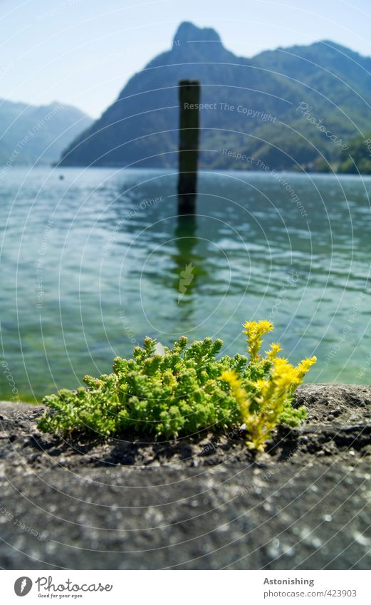 traunsee Environment Nature Landscape Plant Water Sky Horizon Summer Weather Beautiful weather Warmth Grass Moss Hill Alps Mountain sunstone Peak Waves Lakeside