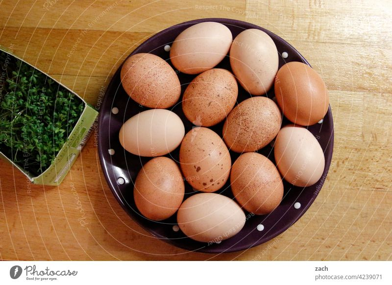 Recommendation | Breakfast egg Eating Egg Hen's egg Food Nutrition Organic produce Brown Easter egg Vegetarian diet eggs Fried egg sunny-side up Cress Plate