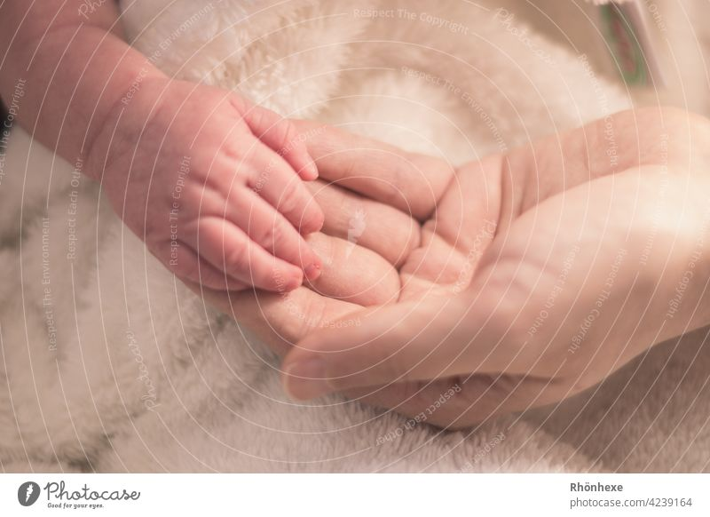 Small hand is held Baby Hand stop Fingers Cute Diminutive cute Protection Fragile Copy Space top Happy fortunate Wonder tenderness Skin Love Newborn pretty