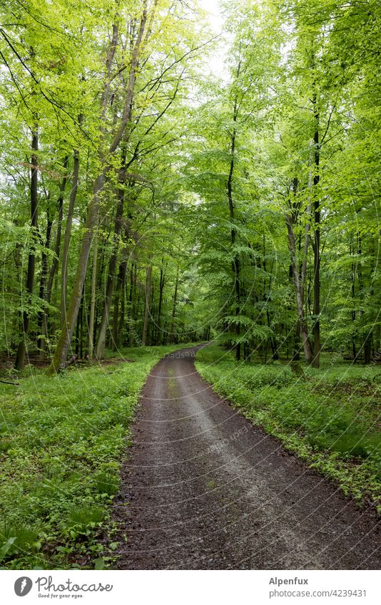Recommendation | Excursion into the countryside Forest Green Spring Tree Exterior shot Nature Colour photo Plant Landscape Deserted Day Environment naturally