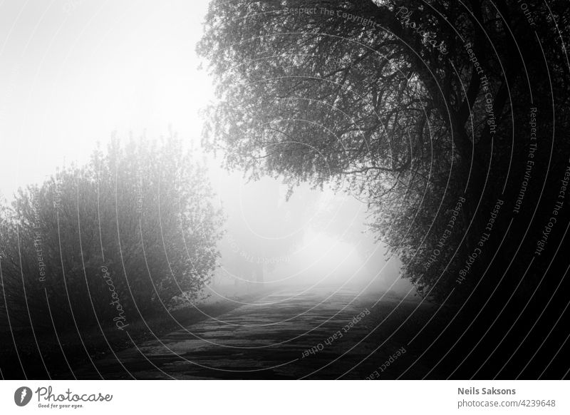 unknown path, challenge to nowhere, mist for all alley autumn background branch colors country dawn deciduous environment fall fog foggy foliage footpath forest