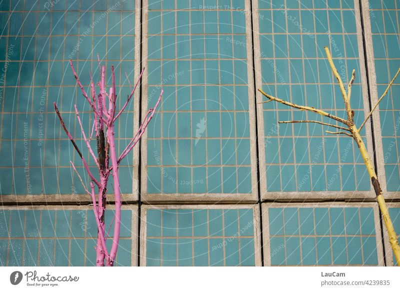 Colorful bare trees in front of a turquoise tile wall variegated tiles Tile Wall Pink Yellow Turquoise Multicoloured Colour photo Wall (building) Pattern Facade