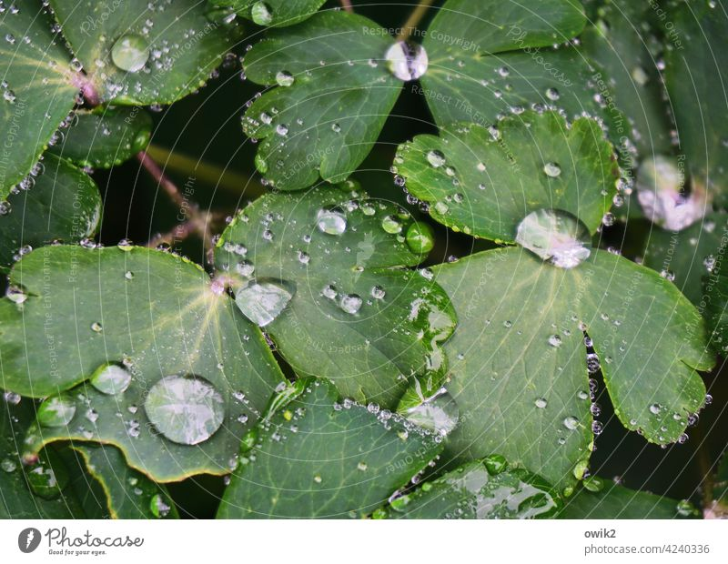 Water garden raindrops water pearls Leaf green sparkle Mysterious Life Contrast Sunlight shine luminescent Morning dew drops Deserted Copy Space bottom Day