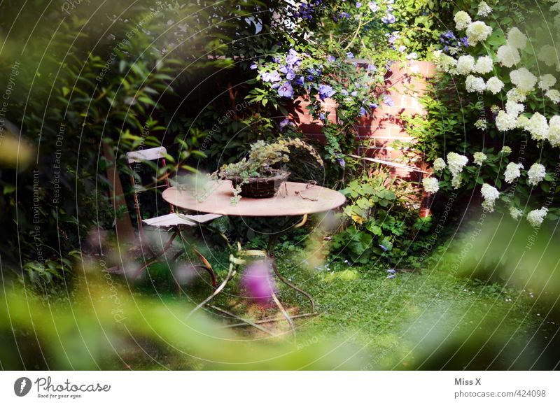 idyllic Contentment Relaxation Calm Living or residing Flat (apartment) Garden Summer Plant Tree Flower Bushes Leaf Blossom Foliage plant Pot plant Outskirts