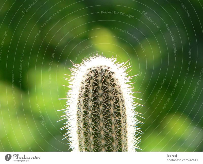 Spiny and green Cactus Blur Green Zoom effect Summer Photographic technology Thorn Bright Point Macro (Extreme close-up) Sun Plant