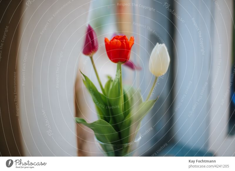 bouquet of tulips in vase near window arrangement background beautiful beauty bloom blooming blossom bunch close up close-up colorful colourful cropped