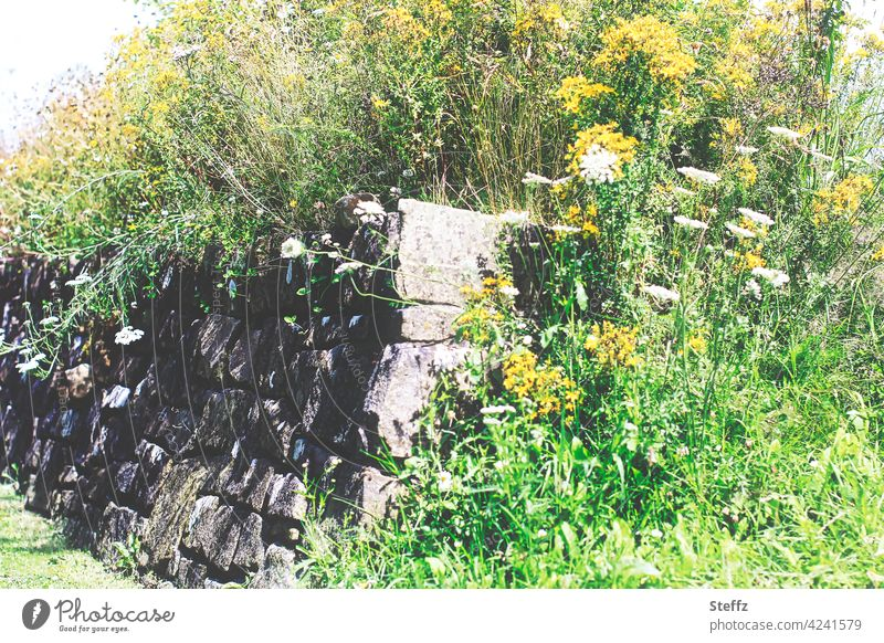 Power of nature - old wall overgrown with wild plants Wall (barrier) Wall plants bricks Wallflowers Overgrown Stone wall lush vegetation The power of nature