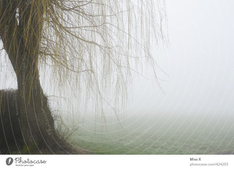 Nature Tree Loneliness Winter Cold Death Autumn Sadness Weather Rain Fog Branch Grief Storm Tree trunk Hang