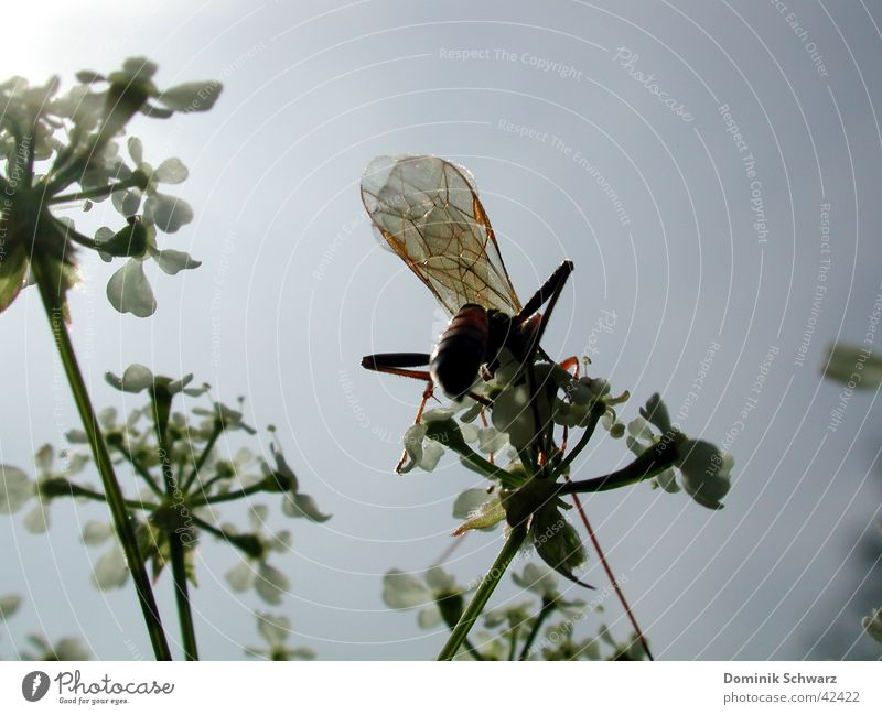 summer air Insect Animal Summer Sky Plant Wing Flying Detail Nature
