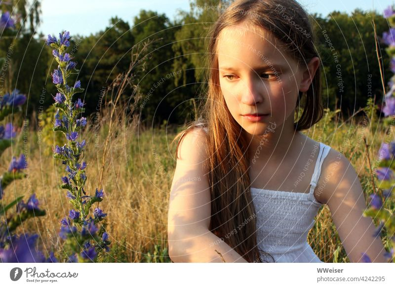 Thoughtfully the girl sits on the summer meadow in the warm afternoon light Girl ponder Infancy Peaceful Sun Plant Light Warmth Summer Field Meadow silent Calm