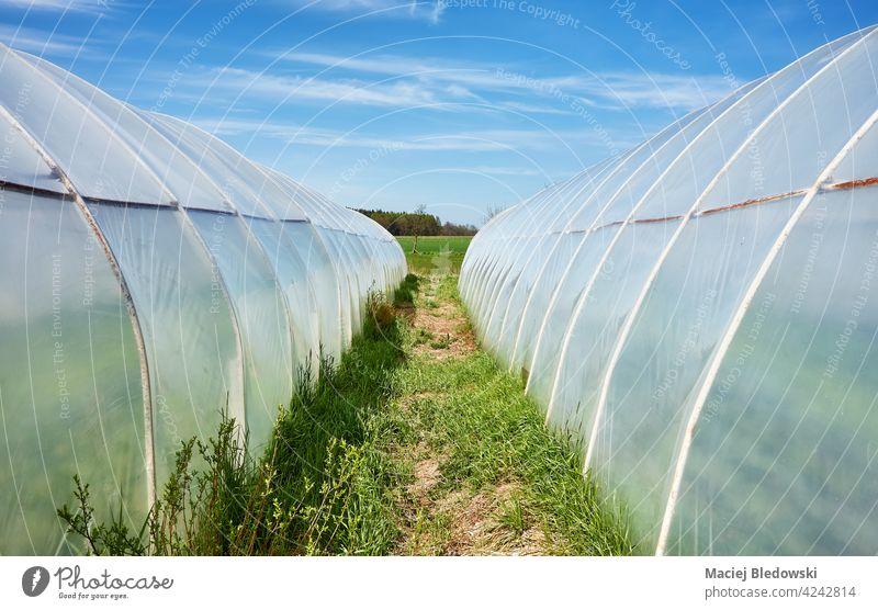 Polytunnels, also known as a polyhouse, hoop greenhouse hoophouse or grow tunnel, on a sunny day. polytunnel agriculture plastic farm gardening sky blue cover