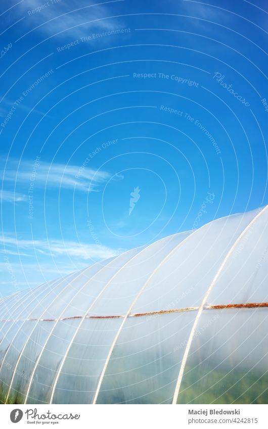 Polytunnel exterior against the blue sky. polytunnel agriculture plastic farm gardening greenhouse cover rural polyethylene industry produce horticulture