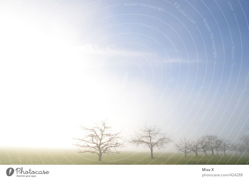 A perfect world in Jungingen Landscape Sky Spring Autumn Winter Weather Beautiful weather Fog Tree Meadow Illuminate Positive Moody Hope Horizon Idyll Nature