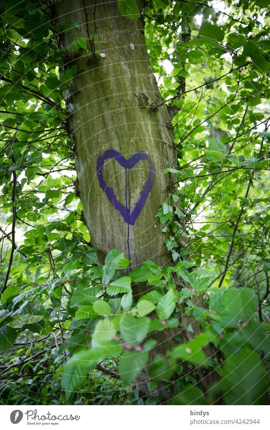 A heart painted on a leafy tree. Love, Expression of Love Heart Tree Summer Nature Romance Infatuation leaves Beech tree Emotions positive feelings