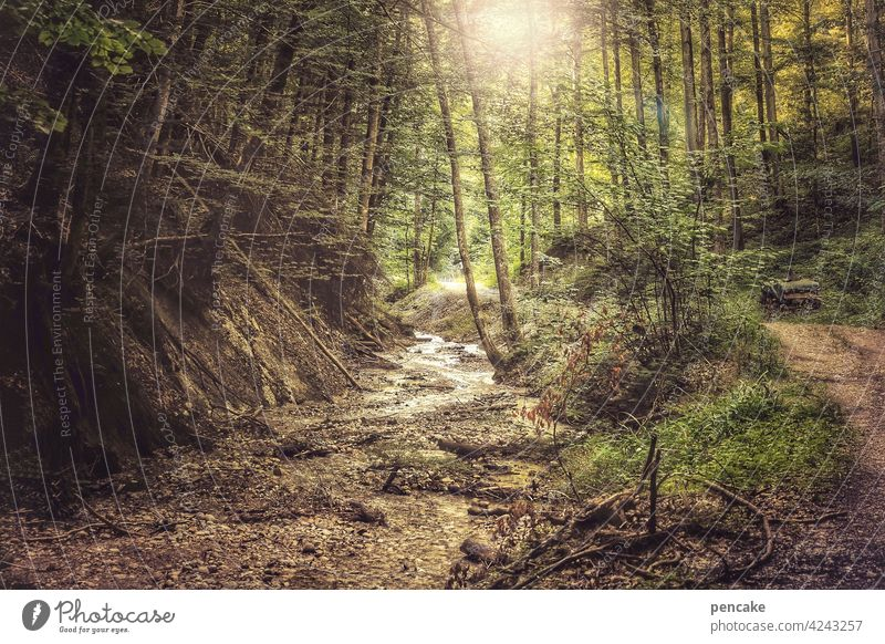 a touch of wild ravine Allgäu Brook Forest Sun off Hiking Experiencing nature Water Mountain River Rock Canyon Stone Landscape Exterior shot Environment