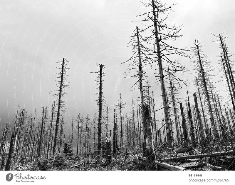 forest dieback Forest death spruces dead Nature Tree Environment Exterior shot Landscape Deserted Climate change Forestry Tree trunk Wood Log Bark-beetle Death
