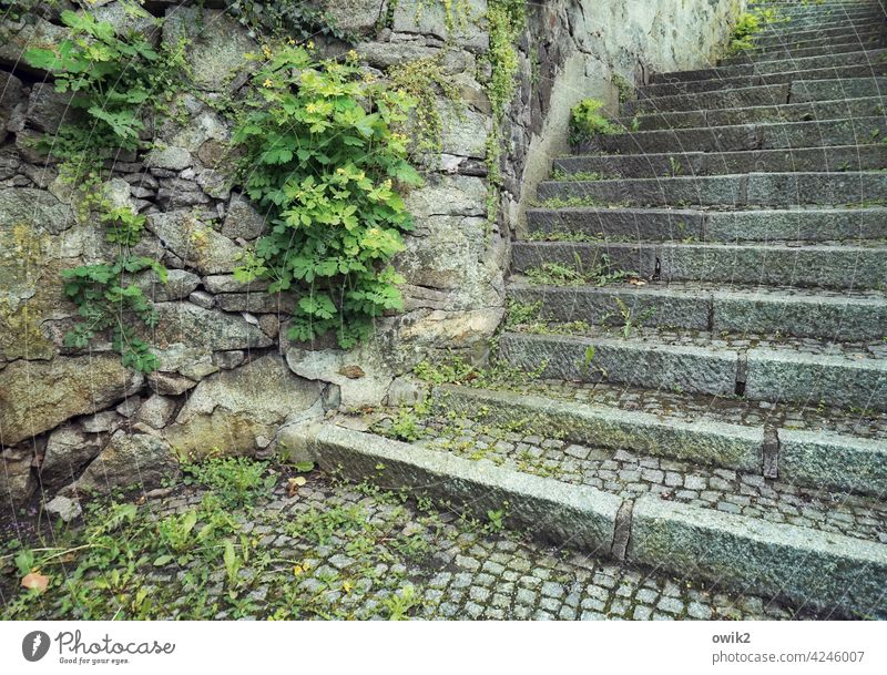 up and running Stairs stair treads Stone Old Manmade structures Exterior shot Deserted Colour photo Wall (building) stones Wall (barrier) Career Landing Level