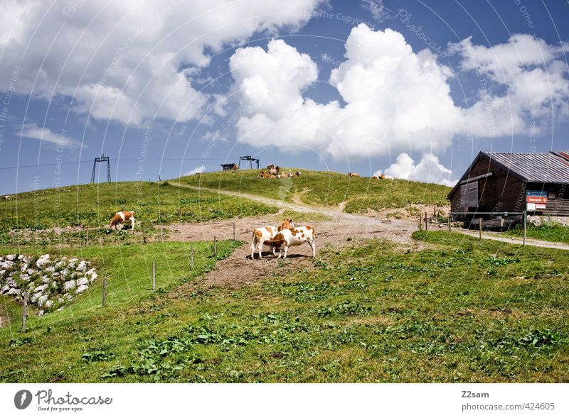 sudel field Nature Landscape Sky Clouds Summer Beautiful weather Meadow Alps Mountain Peak Cow Tall Natural Calm Relaxation Leisure and hobbies Healthy Idyll