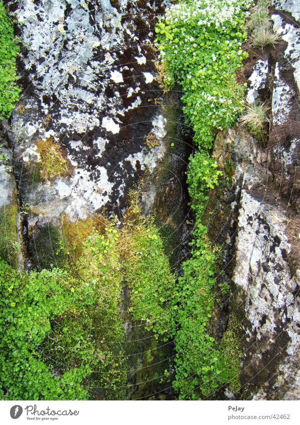 Green Cold Stone Rock Damp Moss
