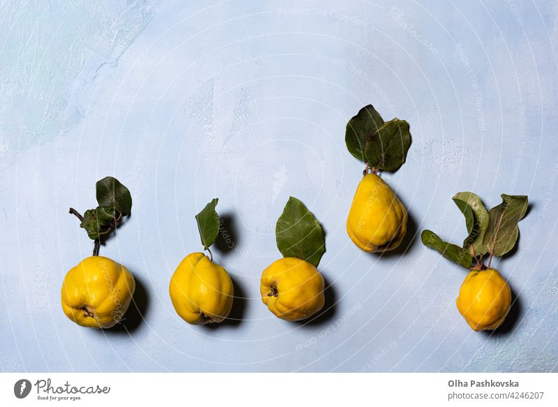 Imperfect organic quince apples row on blue vegetarian Leaf cute Mature Juicy Vitamin Diet Delicious Nutrition Tasty Holiday season Component golden Yellow