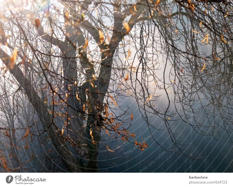 November tree Sunlight Autumn Beautiful weather Wind Tree Leaf Forest To fall Illuminate To dry up Dark Bright Wild Emotions Moody To console Grief Hope Nature