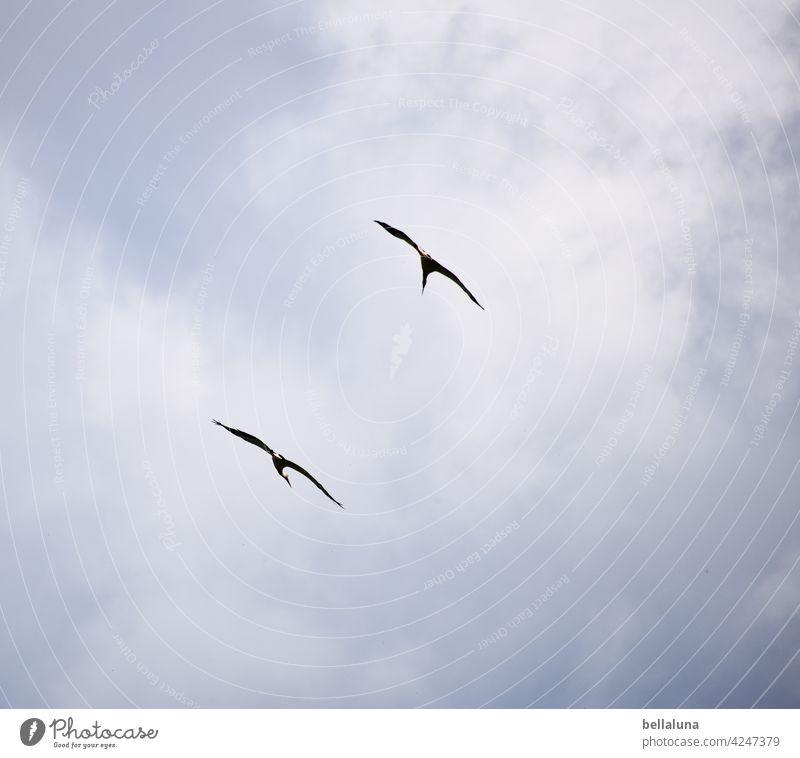 Come on, white stork buddy. We're going in circles. Stork White Stork White Storks Bird Animal Exterior shot Colour photo Wild animal Deserted Day Nature