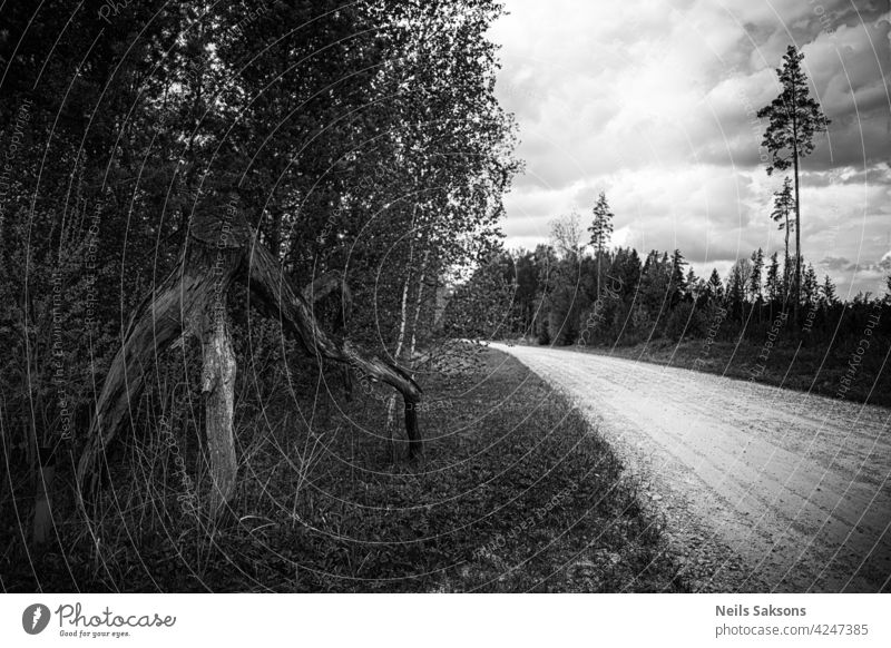 road in the countryside with tree trunk with branches on side fall bare broken death old natural picturesque no people dry earth lying soil sandy thick curves