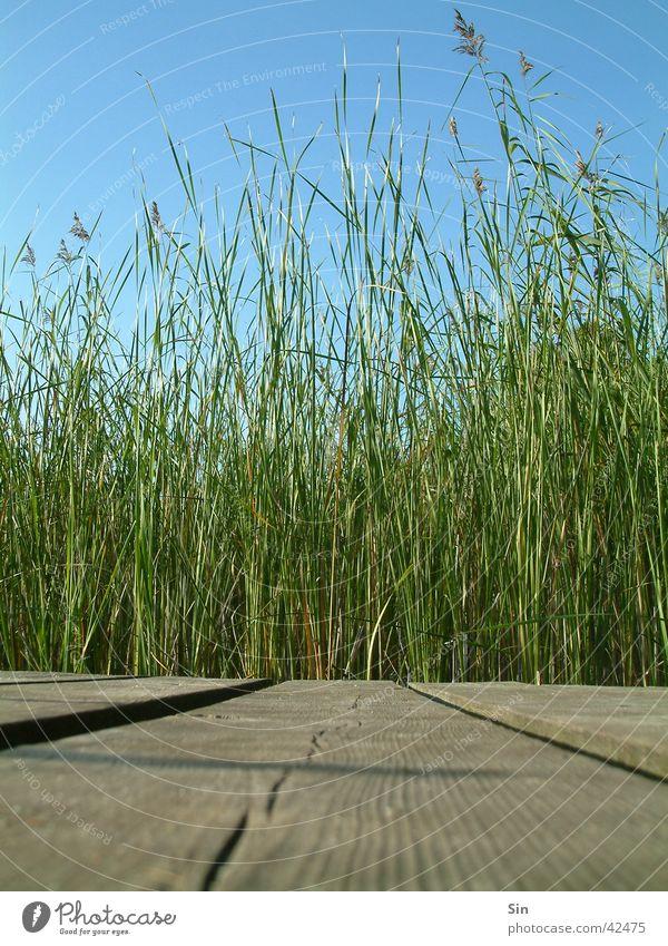 the beautiful Holzweg Footbridge Common Reed Wood Green Plank Sky Blue
