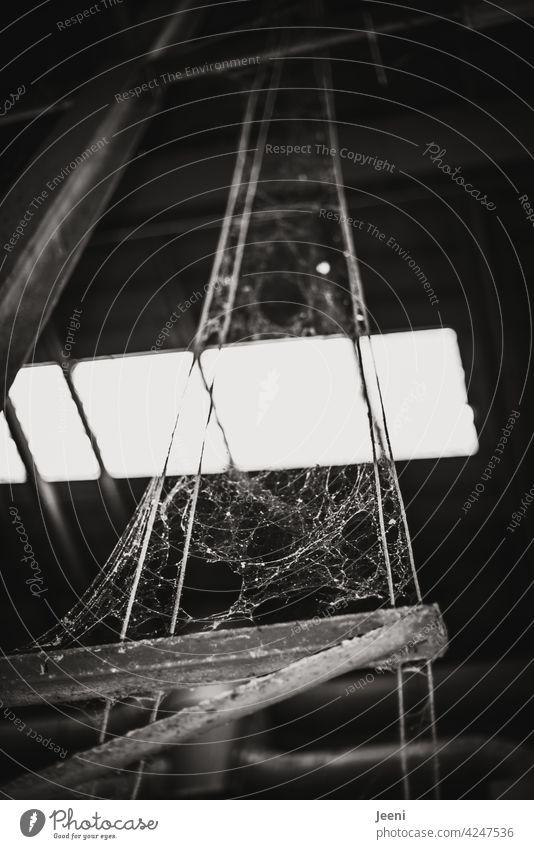 Interwoven work of art Net Spider's web Cobwebby cobweb spiderweb Captured Large huge interwoven Work of art Artwork of nature Uniqueness arachnid Spin captured