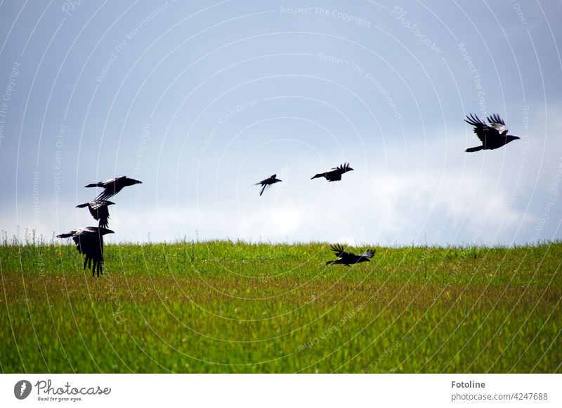 """The crows fly to the casting for the film """"The Birds"""" by Alfred Hitchcock birds Animal Exterior shot Colour photo Wild animal Nature Day Deserted Environment"""
