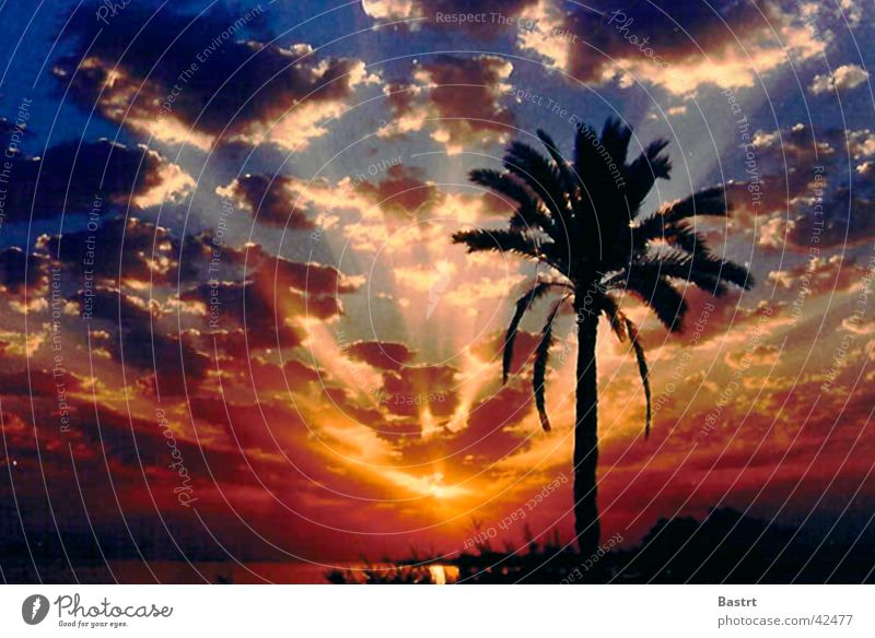 Sunset Palm tree Beach Vacation & Travel Ocean Clouds Romance Sky Emotions