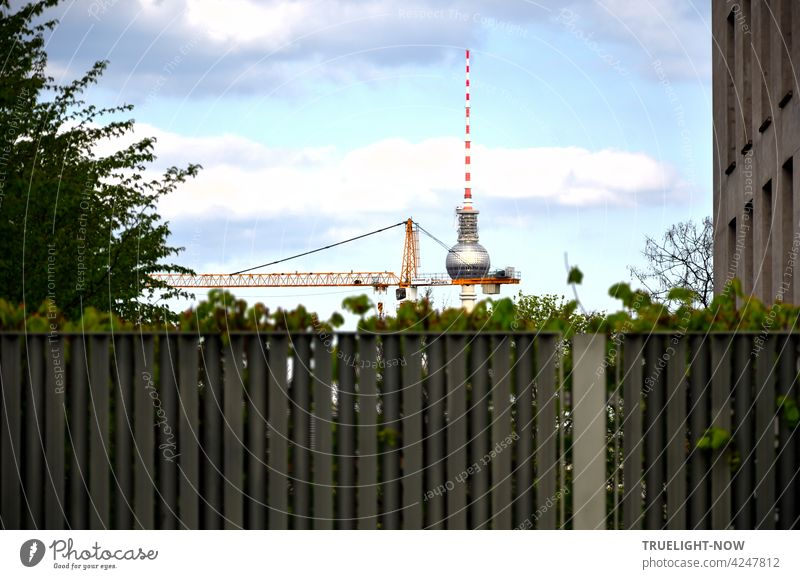A strange fence in front of the garden of the Swiss embassy in Berlin's government district is not high enough to cover the TV tower at Alexanderplatz and in front of it a yellow construction crane as well as bushes in the garden.
