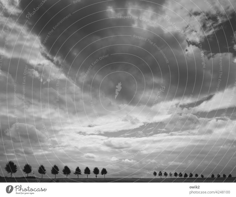 vanishing Landscape Sky Clouds Lanes & trails Tree Cordon Growth Nature Environment Horizon accurate Accuracy Exterior shot Deserted Silhouette Street Stand