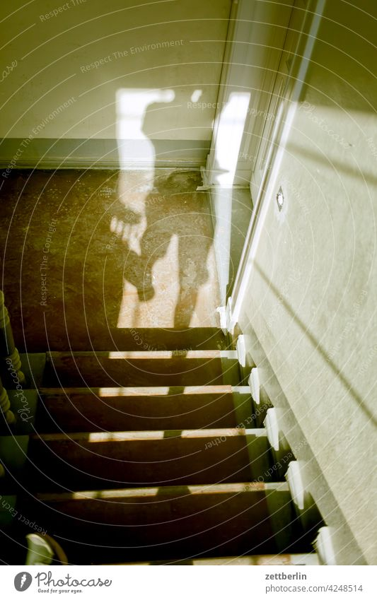 Shadow on the stairs sales Descent Downward Old building ascent Upward Window rail House (Residential Structure) Light Man Apartment house Human being Deserted