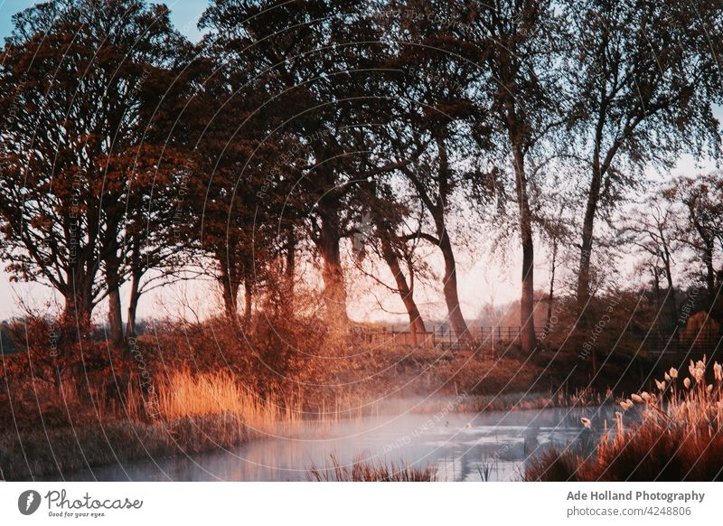 Early morning mist slowly raises from the sleepy pond ponds Nature nature water lake reflection Calm Deserted Water Lakeside Idyll Surface of water Environment