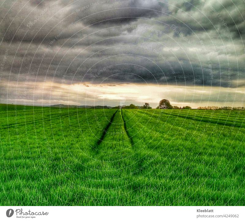 Light! - on the horizon - the new harvest is growing up - green field with carriage after a passing thunderstorm Fahrspuhr Thunder and lightning Horizon