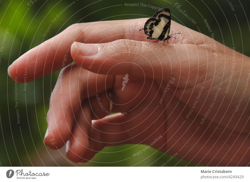 Close up of a tiny hecabe butterfly perched on a woman's hand showing the concept of wellness, sustainable lifestyle and harmony with nature back to nature